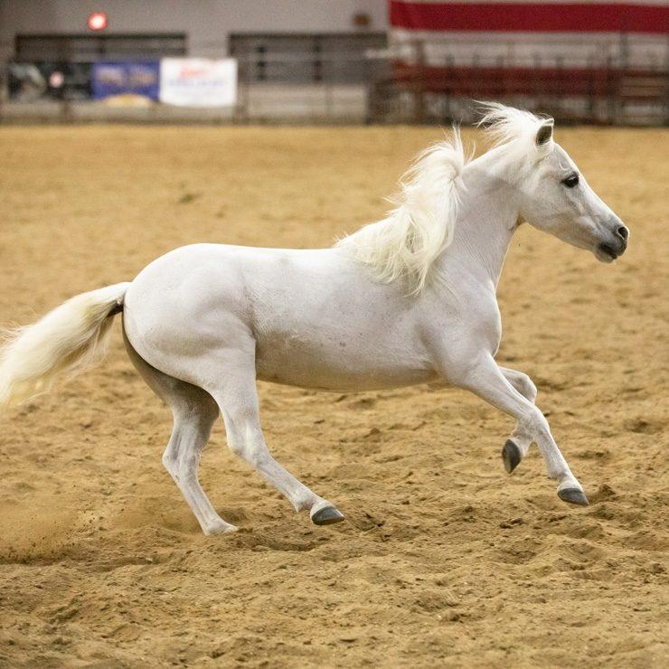 Pony Liberty