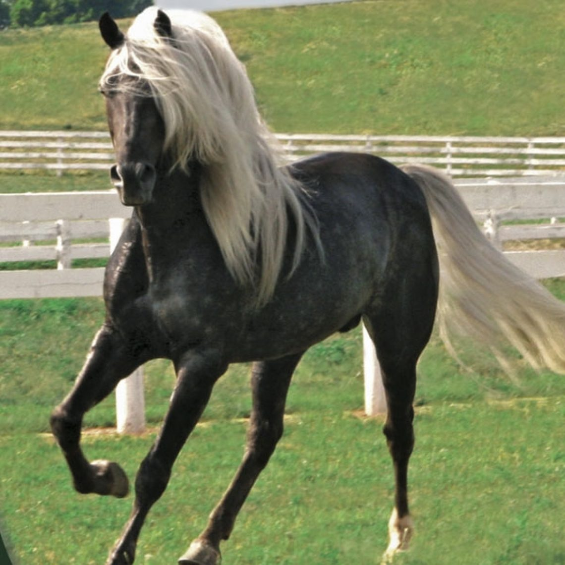 2019 year look- Mountain Rocky horse pictures