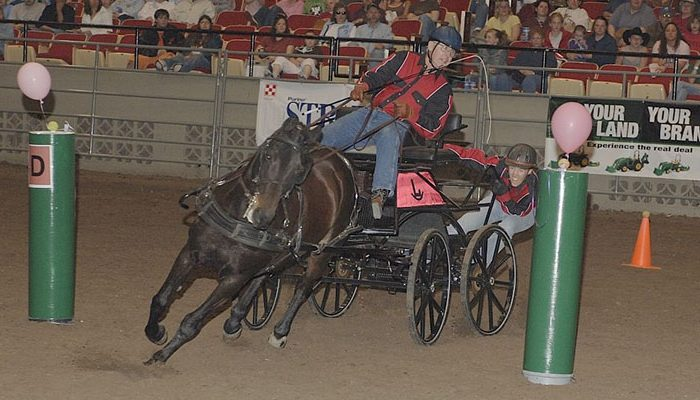 Midwest Horse Fair Driving Derby