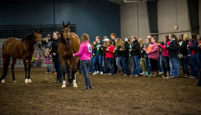 Horse Judging Placings