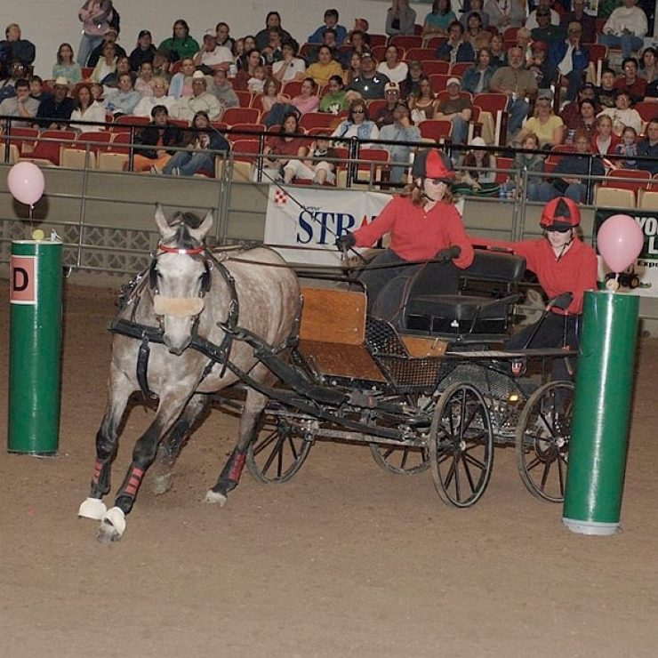 Driving Derby Horse