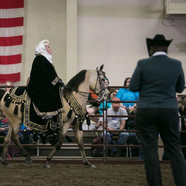 Horse Judging 600 X 600
