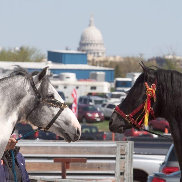 Capital Horses