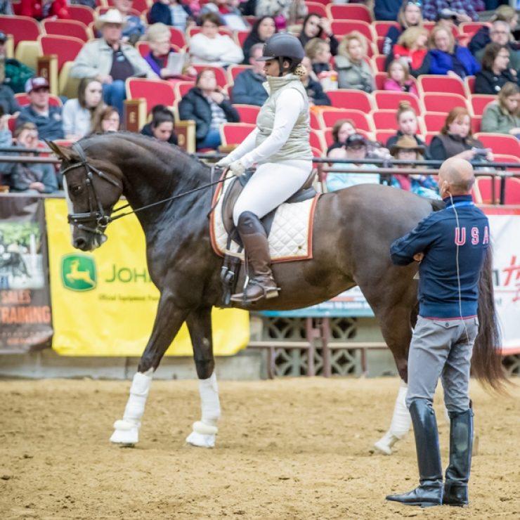 Stallion Photo2