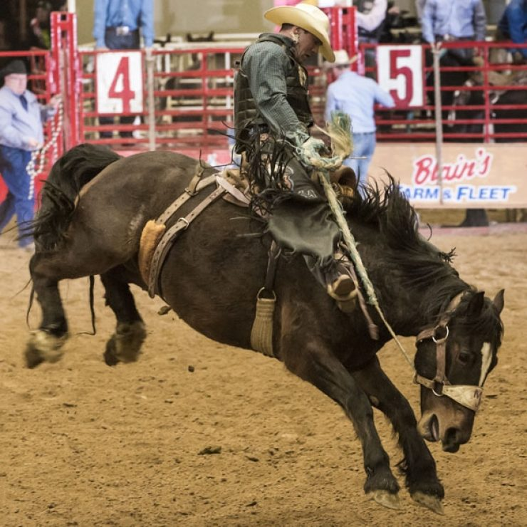 Prca Rodeo Midwest Horse Fair